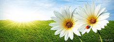 Spring – Ladybug Facebook Timeline Cover