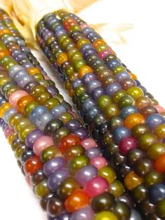 when to harvest glass gem corn Fruit And Veg, Fruits And Vegetables, Colorful Vegetables, Rainbow Corn, Glass Gem Corn, Popcorn Seeds, Colorful Plants, Fruit Trees, Food Art