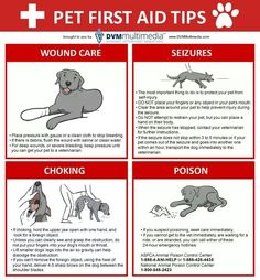 A SHTF Plan For Your Pets