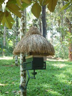 A Look Inside Wayanad #India #Profugo #InternationalDevelopment #Nonprofit