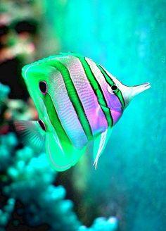 Underwater world #ocean #amazingnature  https://biopop.com/