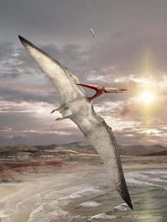 Pteranodon gliding