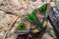Butterflies And Moths 16