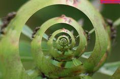 Ameise, Ant, Insekt, Spirale, Strudel, Visionen gehen und leben Strudel, Cantaloupe, Fruit, Food, Ant, Life, Essen, Meals, Yemek