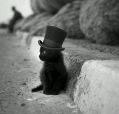 Little cat little hat