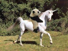 Pandicornio arre unicornio