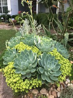 Robert J Bottrell Echeveria blue atoll and Tokyo sun stone crop. Great pairing!