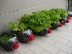 Apartment Garden Ideas simple ladder planter Garden Design With Ium Broke Apartment Gardening Diy On Pinterest Herbs With Garden Pics From