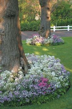 Flower beds around trees