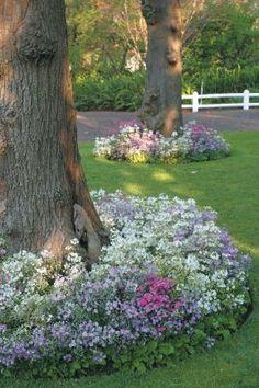 flower bed around tree, flower garden backyard, flower circl, front yards, flower garden landscaping, flower beds, flowers around trees, flowering tree landscaping, circl tree