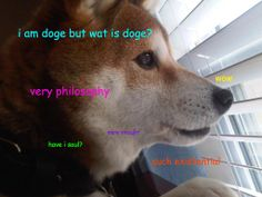 existential doge. I love this but the comic sans is killing me...