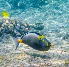 Image result for fishes at hanauma bay