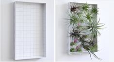 Airplant Frame: Remodelista