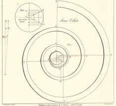 Ionic Volute Design | Volute | Pinterest | Libraries and Design
