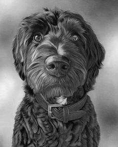 Bertie the cockapoo! Drawn in charcoal isn't he adorable? Really enjoyed this one - especially all of those curls!