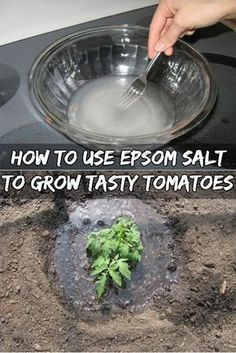 First of all, Epsom salt is not salt. It is NOT something you can put on your food! It's actually a compound called magnesium sulfate that occurs naturally. And Epsom Salt is known for providing Fertilizer For Plants, Hydroponic Gardening, Hydroponics, Organic Gardening, Container Gardening, Gardening Tips, Gardening Gloves, Fertilizer For Tomatoes, Epsom Salt Fertilizer