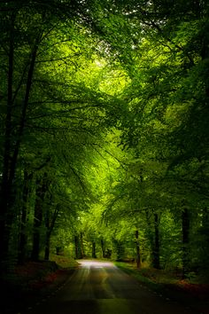 Into the light by Göran Ebenhart on 500px