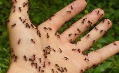 Vyzkoušejte tuto jednoduchou směs a mravenci se vašemu domu vyhnou obloukem | Báječný lékař