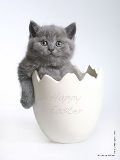 An Easter surprise!