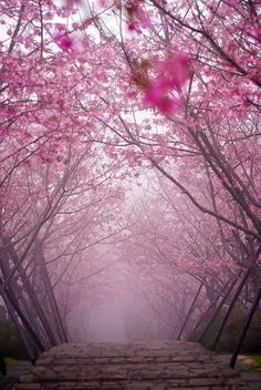 A bridge in Kyoto, Japan. If you like pink, a walk in this garden would be like…