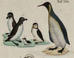 ostrich vintage postcard - Bing Images