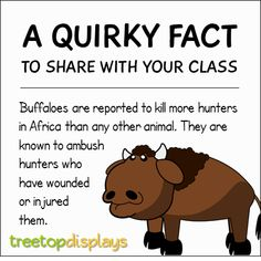 A quirky fact about buffaloes to share with your class - from Treetop Displays. Visit our TpT store for printable resources by clicking on the provided links. Designed by teachers for Pre-Kindergarten to Grade. Animal Facts For Kids, Fun Facts For Kids, Fun Facts About Animals, Jokes For Kids, Wtf Fun Facts, Science For Kids, Funny Facts, Silly Facts, Teaching Kindergarten