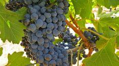 Vasse Felix - Margaret River Wine Region