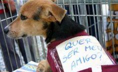 Suzano Shopping tem mais uma edição da campanha de adoção de cães e gatos, em SP