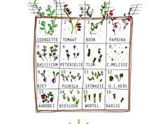 Hieronder vind je onze Moestuinbak. Leuk! Je kunt zien waar welke groente, fruit of kruiden is gepositioneerd. Onderaan de blog kun je het plan en de bijbehorende zaai- en oogstkalender downloaden,...