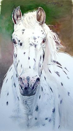 Appaloosa Horse,  Giclee print from original painting by Margi Hopkins, CPSA, of Pepper Portraits LLC.