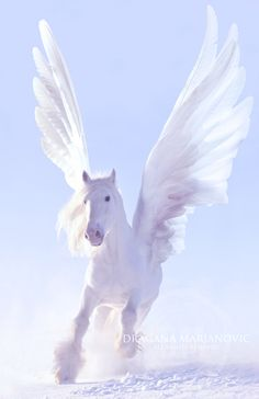 Pegasus by GRAPHICSOUL.deviantart.com on @DeviantArt