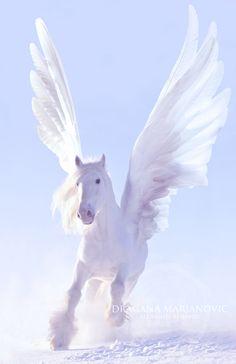 Pegasus by GRAPHICSOUL.deviantart.com on @DeviantArt