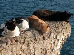 Gatos de Cadiz