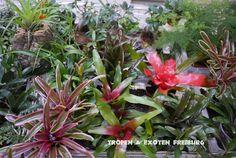 Terrarienpflanzen in unserem Terraristik Fachgeschäft in 79108 Freiburg in  der Offenburger Str. 33c