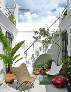 LOVE the white- full-on sunlit white. Tropicals, yes. LSS  Patio in the home of Bruno Frisoni and Herve Van Der Straeten - Tangiers, Morocco
