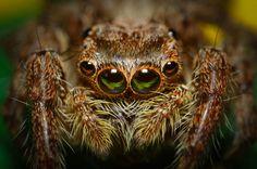 Hormiga fuerza de boluntad pinterest la cara hormigas y insectos - La libelula fuengirola ...