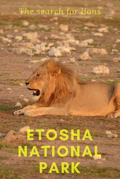 Etosha National Park is one of Africa's great wildlife experiences...in dry season. I had a harder time finding the animals in rainy season. Here's how I found lions...