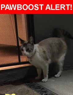 Is this your lost pet? Found in San Diego, CA 92154. Please spread the word so we can find the owner!  White and grey cat with blue eyes , very friendly, not a street cat , has a pink and polka dots collar with a bell   Near Bleriot Ave & Foss St