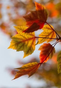 I love this photos for so many reasons: the color palette, the open space, the translucent leaves, a hint of muted Fall sunlight. What do you notice most? Photo by Aaron Burden on Unsplash. Iphone Wallpaper Herbst, Fall Wallpaper, Mobile Wallpaper, Leaves Wallpaper, Pastel Wallpaper, Bokeh, Fall Instagram Captions, Autumn Scenes, Orange Leaf