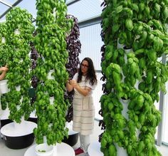 The GreenHouse - Orlando, Fl. Local Tower Garden Farmer Produces Aeroponic Food for Disney, Emeril's, and other Fine Orlando Restaurants What Is Greenhouse, Greenhouse Farming, Hydroponic Farming, Hydroponic Growing, Aquaponics System, Aquaponics Plants, Greenhouse Wedding, Greenhouse Plans, Vertical Hydroponics