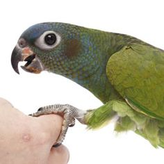 There+are+a+lot+of+myths+surrounding+parrots,+so+learn+the+facts+about+living+with+pet+birds.
