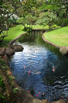 Koi pond in Garden