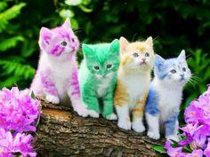 Rainbow Kitty Club
