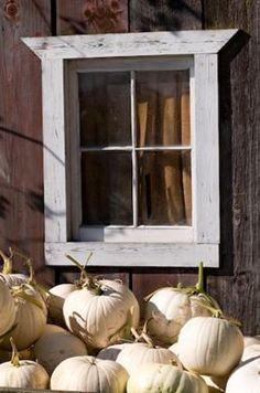 White Pumpkin Harvest ... BUY your firelogs NOW! FROM: http://media-cache-ak0.pinimg.com/originals/5b/3d/dd/5b3ddd26427be17e2d68404994bca4cd.jpg