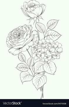 Floral garland of hydrangea and rose on white background. Flower head of blossom. Floral garland o Flower Line Drawings, Flower Sketches, Art Sketches, Art Drawings, Art Floral, Floral Drawing, Flower Coloring Pages, Colouring Pages, Coloring Books