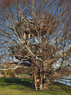 The 50 Most Amazing Tree Houses in the World