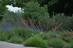 Red Yucca – Mealy Blue Sage in back, Russian Sage and Copper Canyon and Angelita Daisies in front.