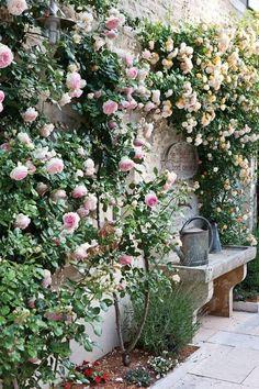 Flower Garden Projects That You Can Do It Yourself - Dream garden - Blumen & Pflanzen Small Courtyard Gardens, Small Courtyards, Small Gardens, French Courtyard, Courtyard Design, Courtyard Ideas, Balcony Design, Wall Climbing Plants, Climbing Roses