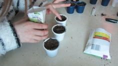 k-cups-in-the-classroom for seedlings  http://www.cbc.ca/m/news/business/keurig-k-cups-recycled-to-solve-grade-6-math-problems-1.3072522