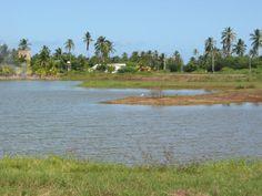 MIRANDA,municipio Pedro Gual. Bosque Mar.